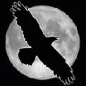 RavenFotka uživatele %s