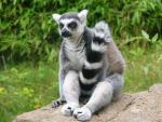 LemurFotka uživatele %s